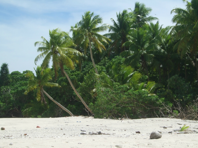 Palau T88ZT