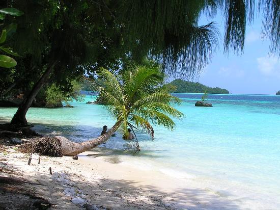 Palau T8XX T88UE DX News