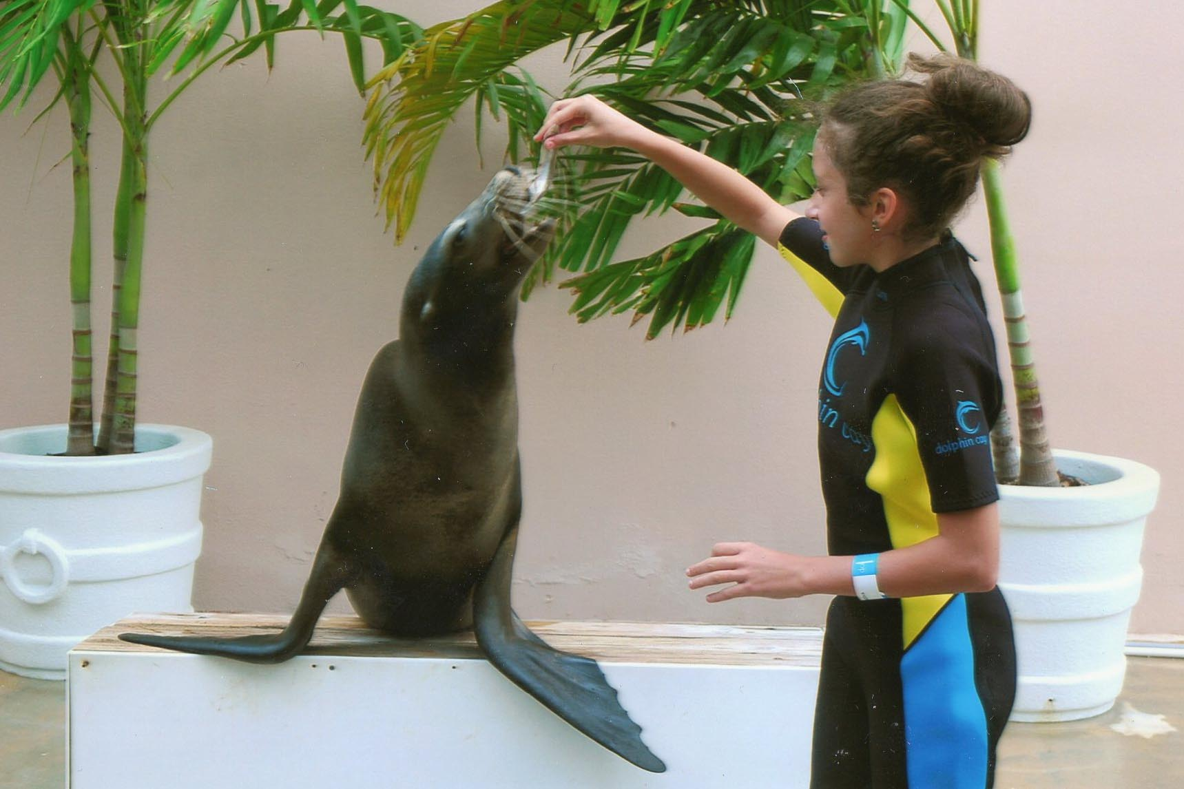 Hotel Atlantis Paradise Island Maria Sea Lion