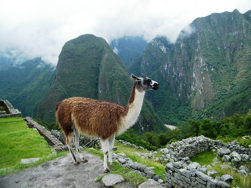 Peru OA5/K8GU