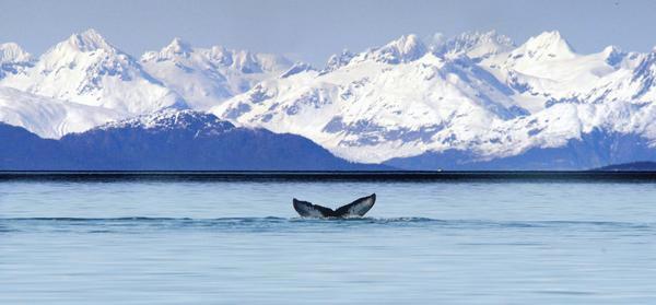 Pleasant Island Alaska DX News