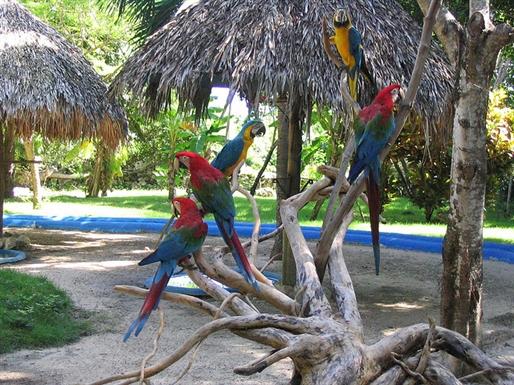 Punta Cana Dominican Republic DX News HI7/OT4R