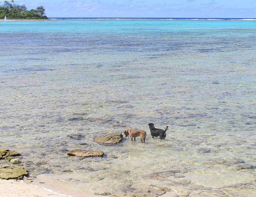 Rarotonga Island E51FOC E51AGY DX News