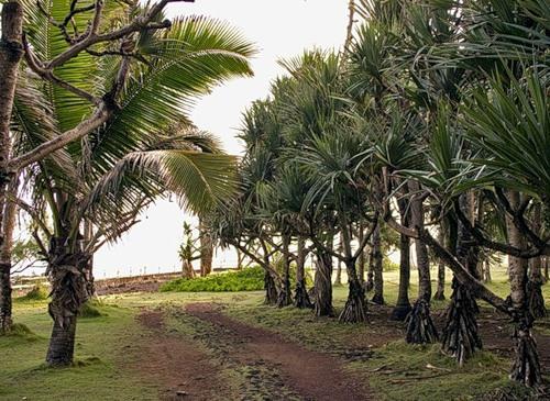 Reunion Island DX News FR/F8APV