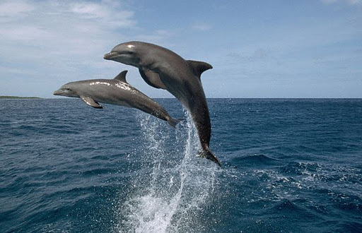 Roatan Island Honduras HR9/AI5P