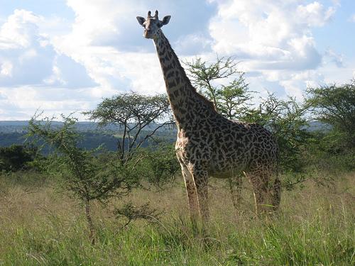 Rwanda 9X0TL