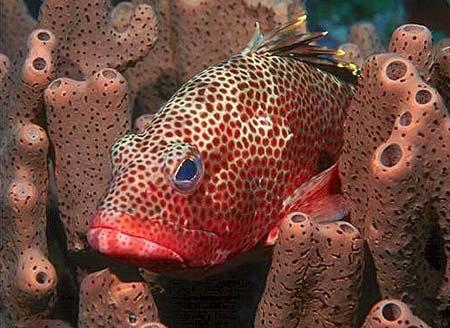 Подводный мир Остров Саба