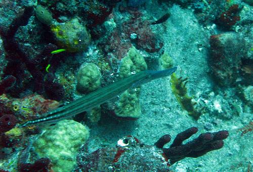 Saint Barthelemy Island Diving FJ/SM5FUG