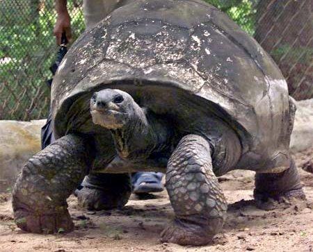 Saint Helena Island ZD7XF Turtle