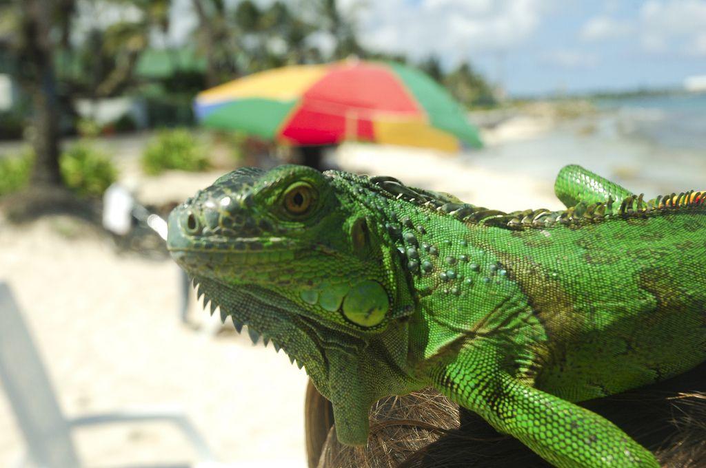 San Andres 5J0X DX News Iguana