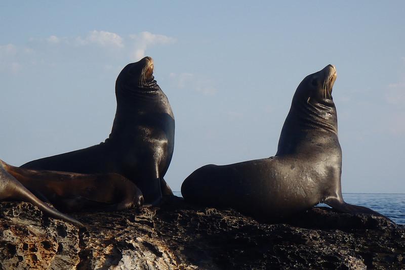 Остров Санта Маргарита XF1M Морские Львы
