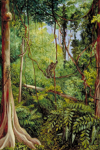 Sarawak Borneo Island 9M8Z