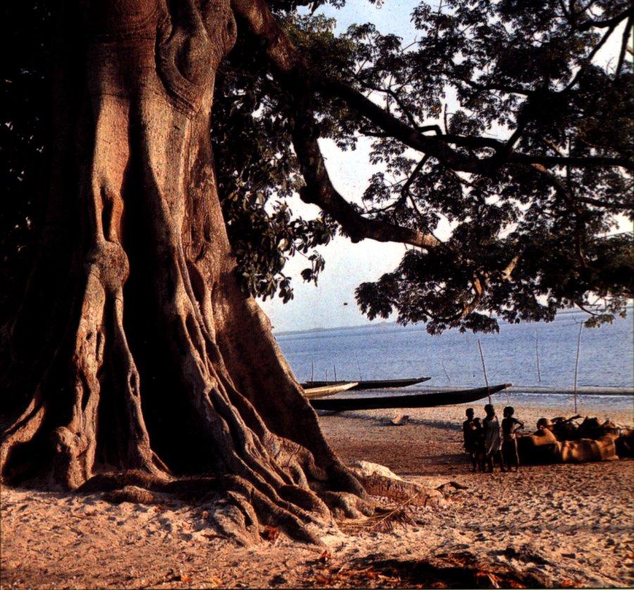 Senegal 6W/F5NVF Baobab