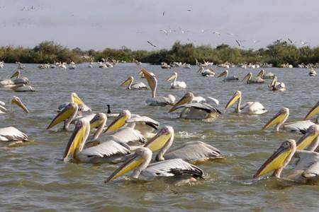 Senegal DX News 6V7Z