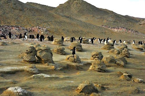 Остров Сеймор Антарктида  LU4ZS Антарктическая станция Марамбио Пингвины