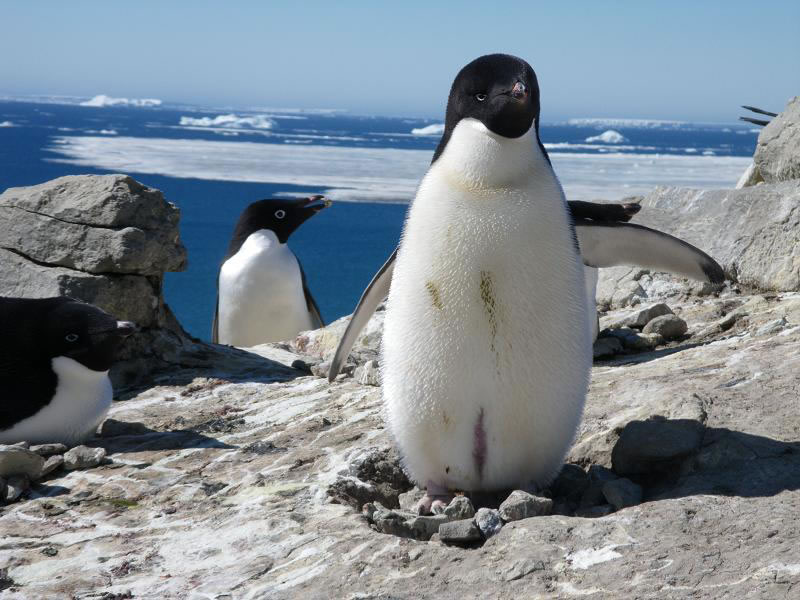 Остров Сеймор База Марамбио LU4ZS Антарктида