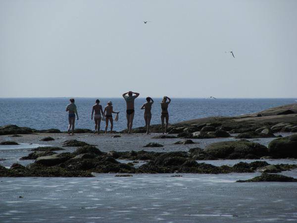 Shogly Island