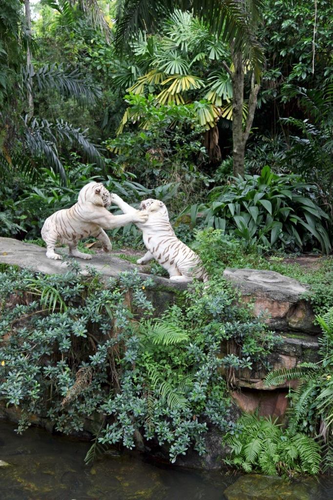Сингапур 9V1RM Сингапурский Зоопарк