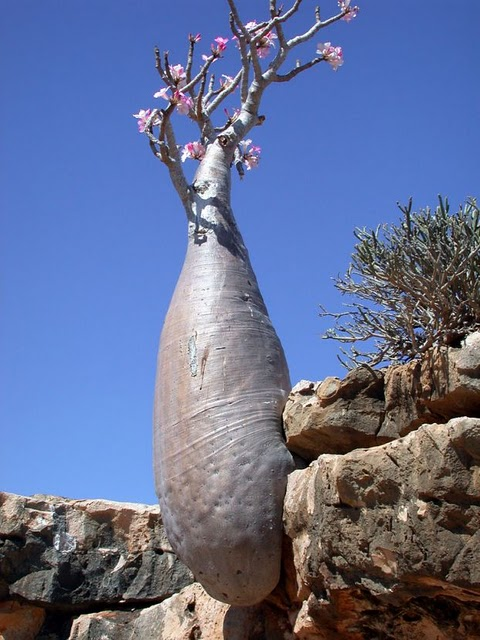 Socotra Island Yemen DX News 7O7S