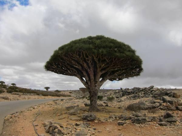 Остров Сокотра Йемен 7O2A