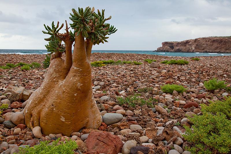 Остров Сокотра Йемен 7O6T DX Новости