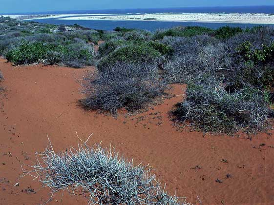 Сомали T5TC