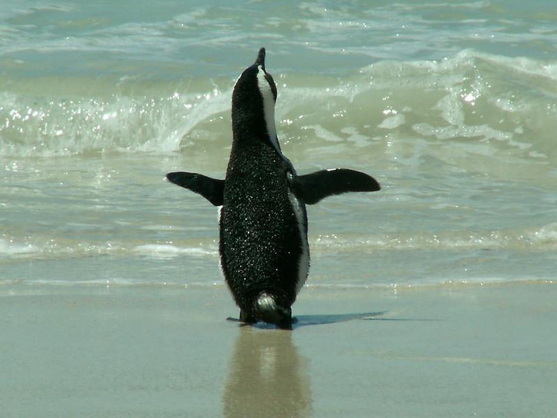 Южно Африканская Республика Пингвин ZS4TX