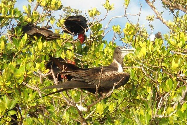 Остров Саут Уотер Кей South Water Caye V31JZ/P Белиз