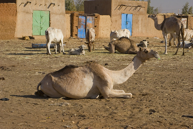 Судан ST2BY Верблюжий Рынок