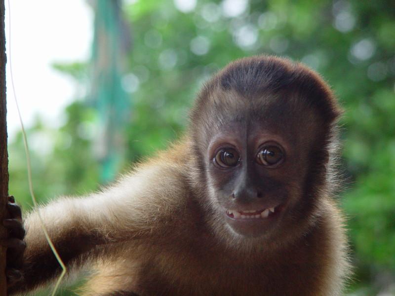 Suriname PZ5P WPX SSB 2012