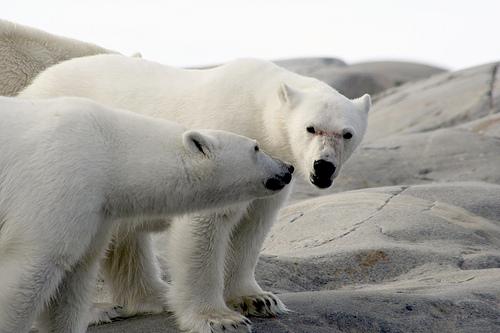 Svalbard Island JW5E RSGB IOTA Contest 2010