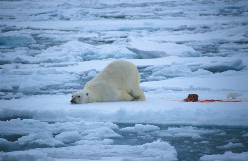 Svalbard Island JW/HB9LEY JW/JQ2GYU