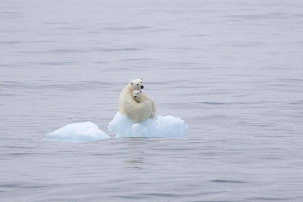 Svalbard Islands JW/LZ1UQ JW/LZ2HM