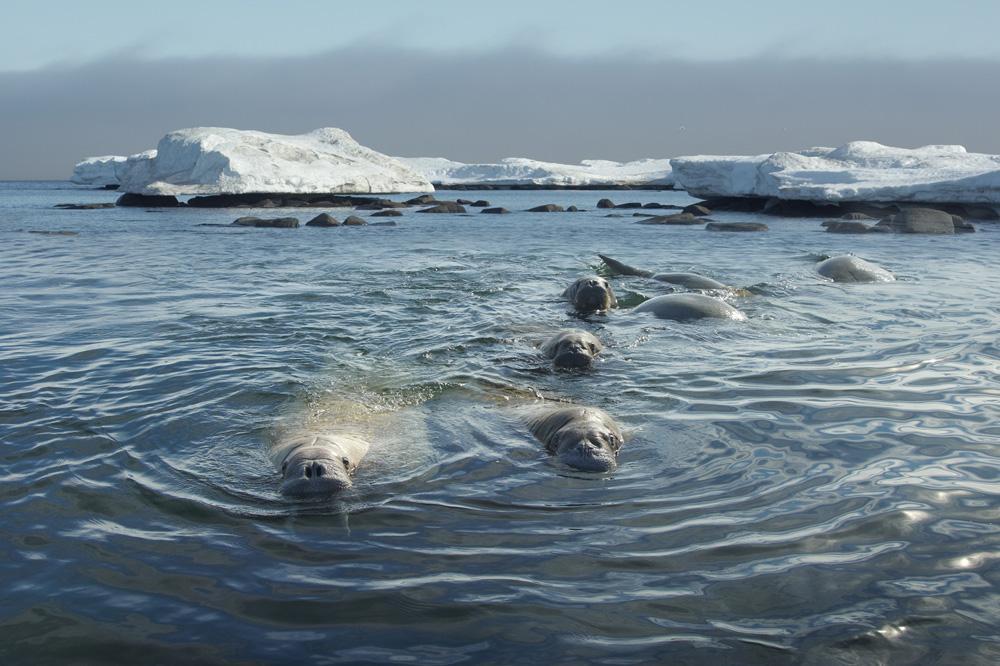 Svalbard Islands JW1U JW4KQ JW9OI