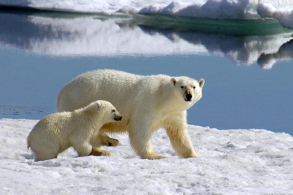 Svalbard Islands JW1U JW4KQ JW9OI DX News Tourist Attractions