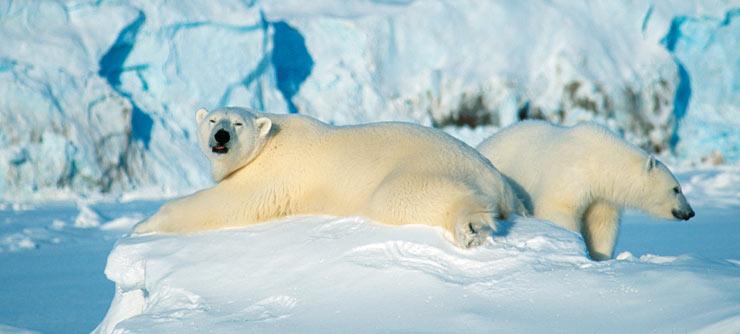Шпицберген JW7QIA Белые медведи