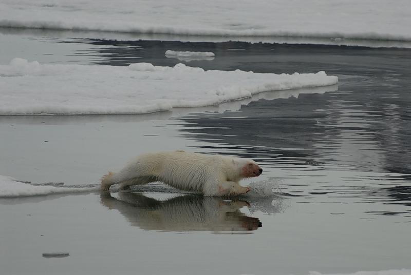 Svalbard Islands JW8OSA DX News