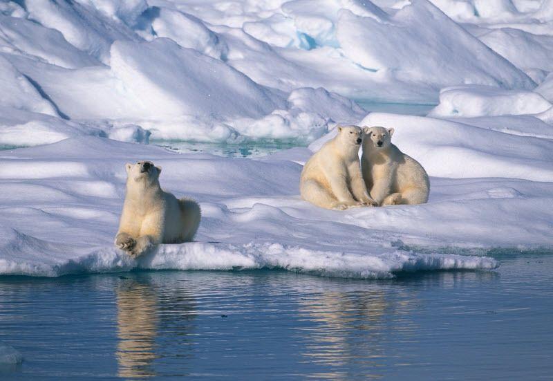 Svalbard JW/8S5A