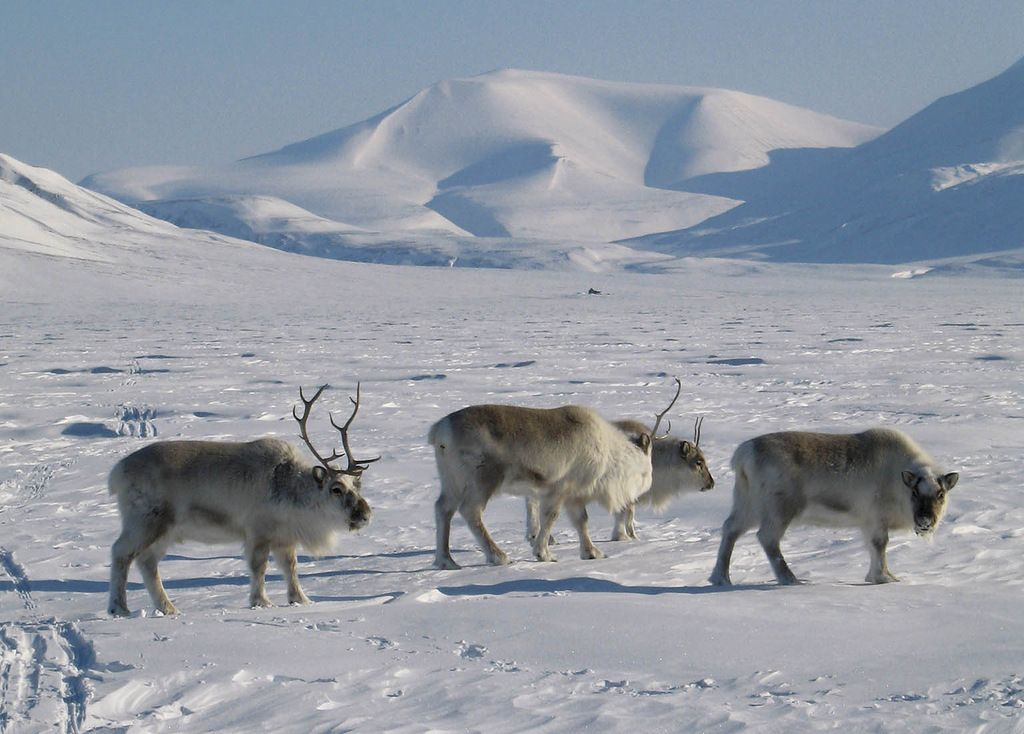 Svalbard Archipelago JW/DL5CW JW/DL6JF JW/DL2JRM