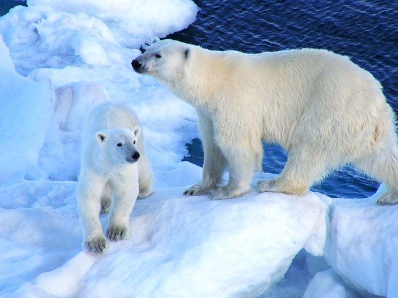 Svalbard Archipelago JW/DL5CW JW/DL6JF JW/DL2JRM DX News