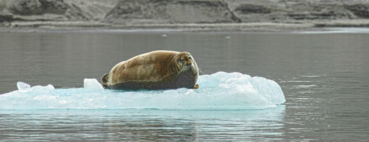 Svalbard JW4OFA