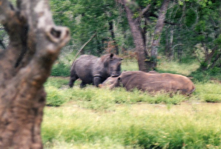 Свазиленд 3DA0PW Носорог