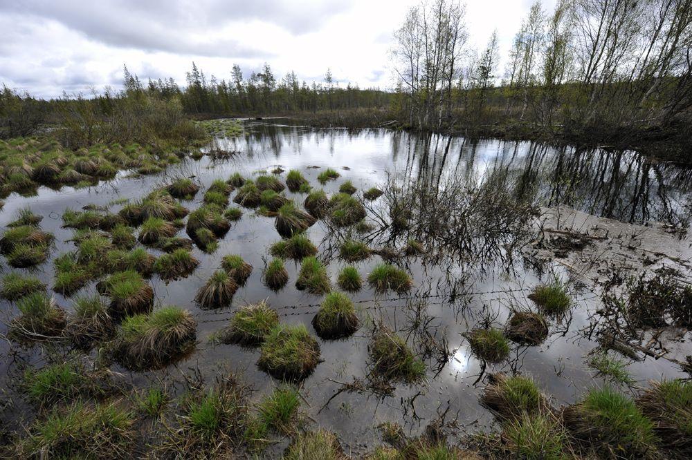 Природа Норрланда уникальна, но очень сурова, – в основном на протяжении года там  влажно, холодно и темно.