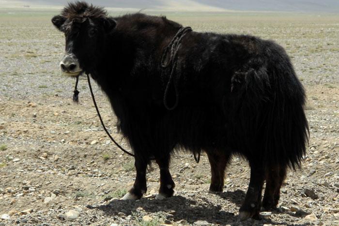 Таджикистан Як EY8CC DX Новости