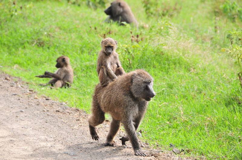 Танзания 5H3MB 2012