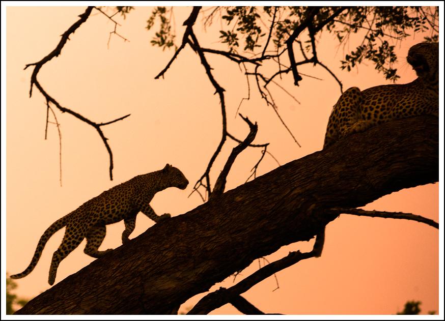 Tanzania 5H3OC DX News Leopard