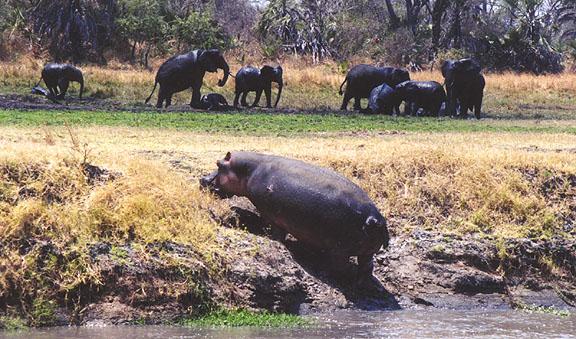 Танзания DX Новости 5H3ACR 5I3A Бегемот Слоны