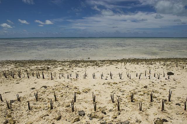 Остров Тарава Западное Кирибати T30PY T30SIX