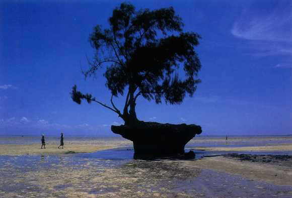 Temotu Province Solomon Islands H40T DX News