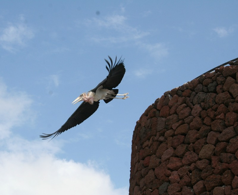 Tenerife Island Canary Islands EF8C